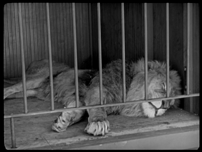 Charlie Chaplin. The Circus. lion sleeping