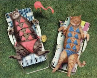 gatas al sol