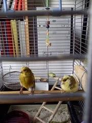 بوبی و دخی