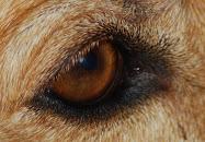Dine gyldenbrune øyne