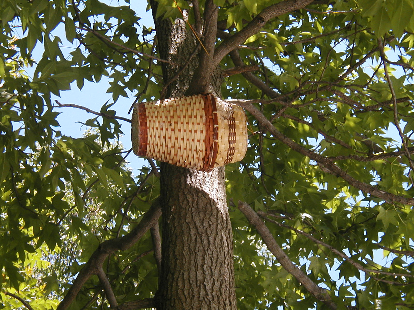 bee hive journal help and advice for beekeepers