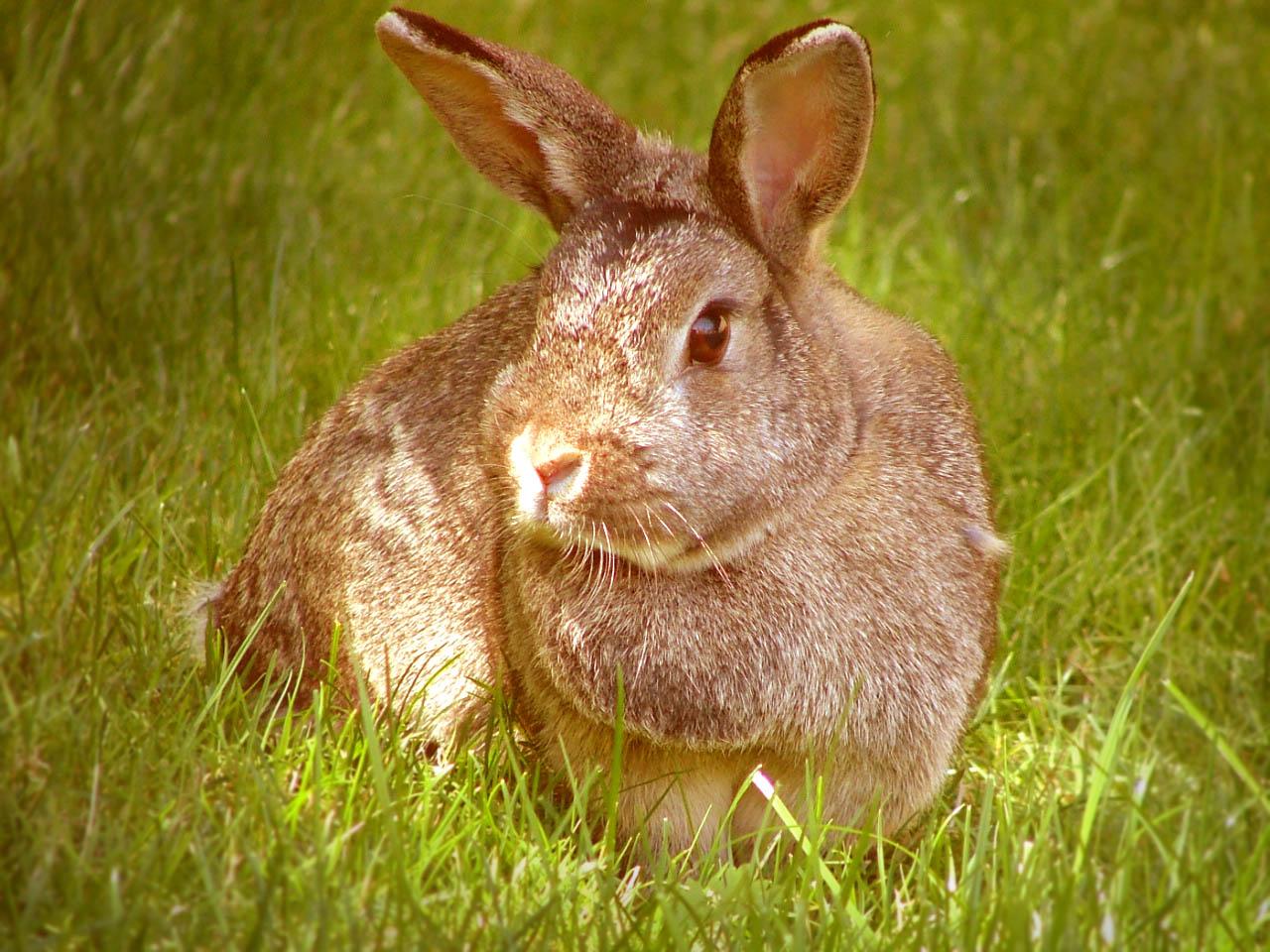 [easter+bunny.jpg]