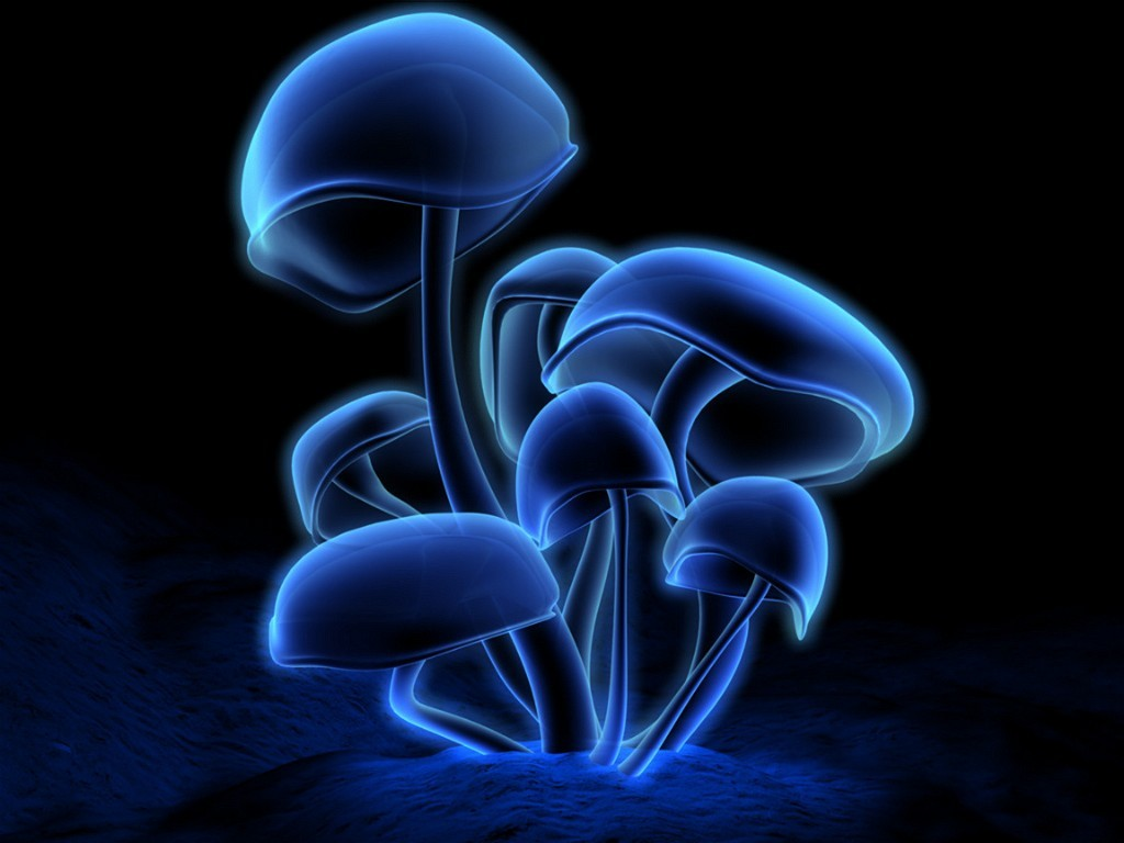 http://3.bp.blogspot.com/_4VDzWFZ0-bk/TElWSBlPWzI/AAAAAAAAAHc/xmgC_frhi_8/s1600/3D-graphics_3D_wallpapers_mushrooms_000074_1.jpg