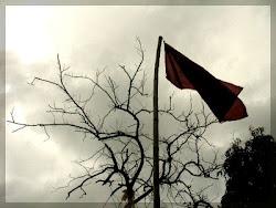 Dame al mundo como patria...