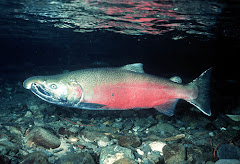 It is salmon, not pink
