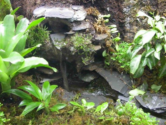 Waterfall vivarium terrarium on Pinterest   Vivarium, Rock ... 10 Gallon Dart Frog Vivarium