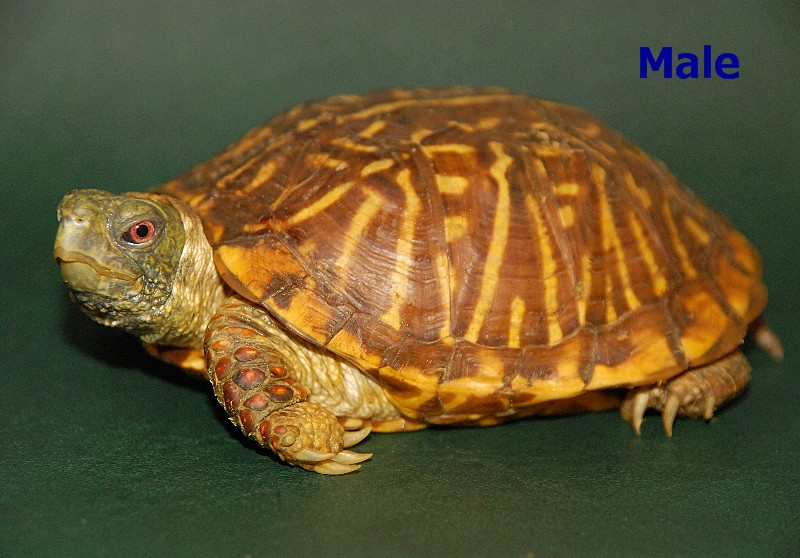 Texas reptiles more rescue adoptions rescuemeorg dog breeds picture