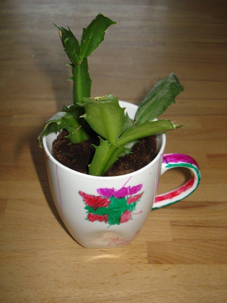 [plantcutting2.jpg]