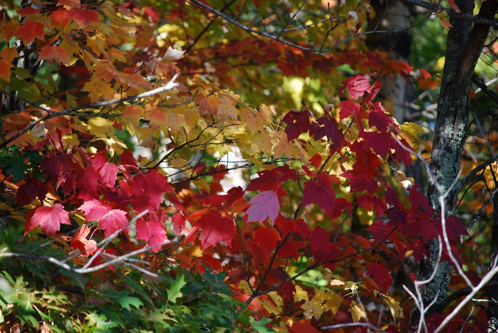 minnesota fall foliage