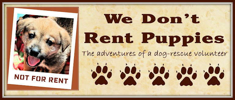 We Don&#39;t Rent Puppies