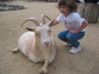 Post-Eclipse Advice: Pet The Goat