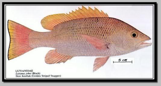 Ikan Jenahak