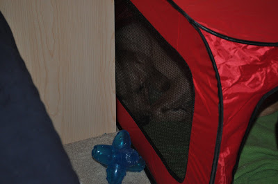 Just another angle of lola in the crate, you can see her sleeping at the back through the side window, she is between my little nightstand and the wall, there is a blue star shaped toy right outside of the crate.