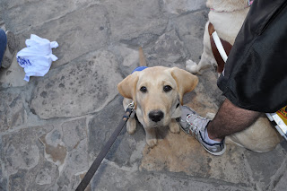 Bob sitting on the ground next to Darrell's leg, he is wearing his puppy jacket and looking up at me. Part of Darrell and Egypt can be seen in the picture, they are facing the opposite way and Egypt is sitting in between Darrell's legs.
