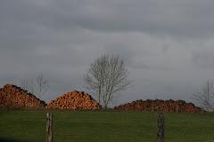 la photo du 3 mars 2010 (643)