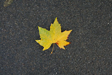 la photo du 17 octobre 2008 (158)