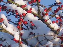 la photo du 24 décembre 2009 (574)