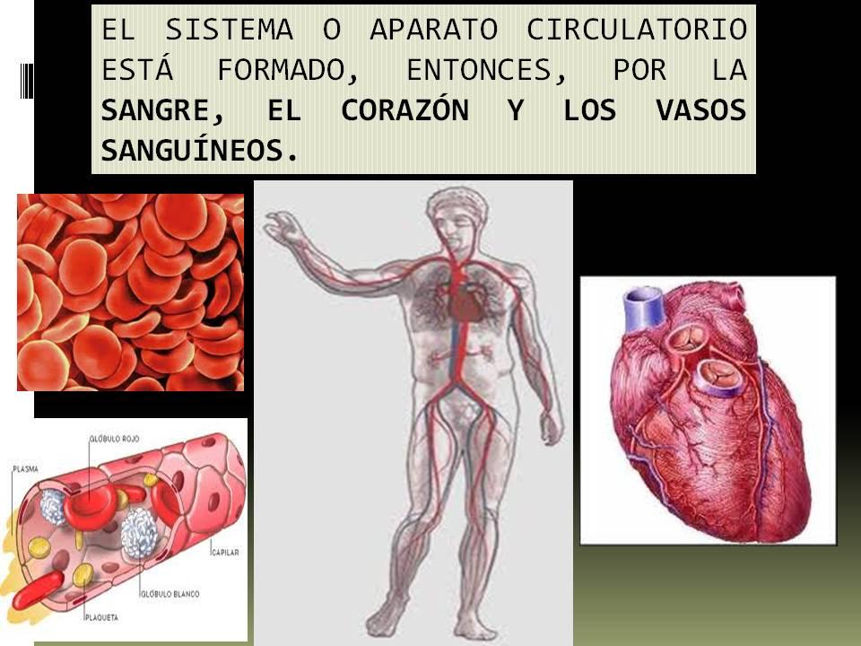 Anatomía y Fisiología humana: SISTEMA CARDIOVASCULAR.