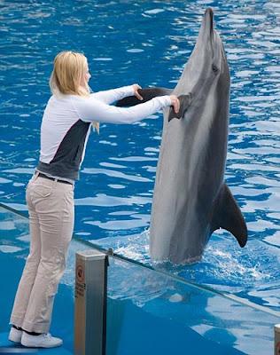 delfin Los delfines son tan listos como los humanos