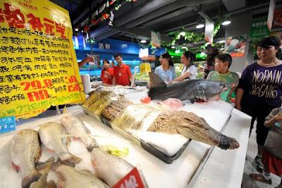 cocodrilos Cocodrilos vivos en los mercados chinos