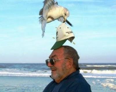 thmataque de gaviota Los ataques de gaviotas