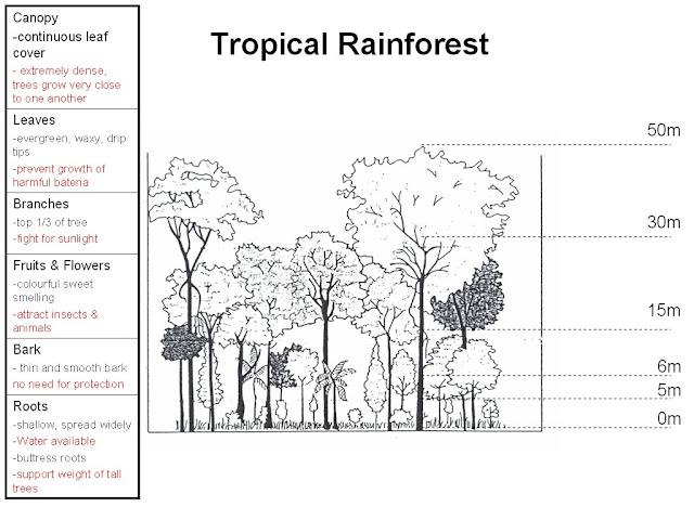 Geography & Cartoon Blog: Natural Vegetation - Characteristics of ...