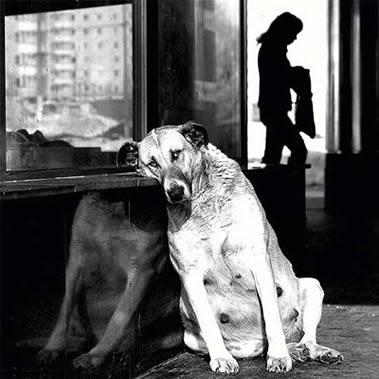 perros tristes (el post mas triste)