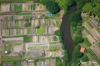 Vue aérienne d'un jardin ouvrier