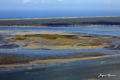 Vue aérienne de l'île aux oiseaux sur le Bassin d'Arcachon