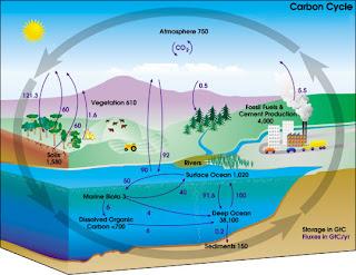 nitrogen cycle nasa - photo #4