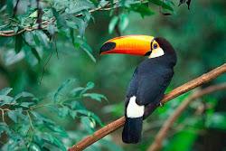 2010 Año Internacional de la Biodiversidad