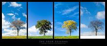 Da árvore do silêncio pende o seu fruto, a paz  -  Schopenhauer