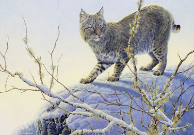 bobcat painting by wildlife artist Shari Erickson
