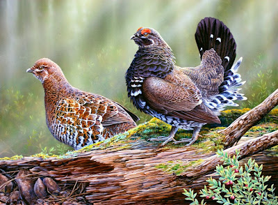 Spruce Grouse painting by Oregon wildlife artist Shari Erickson