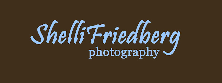Shelli Friedberg Photography