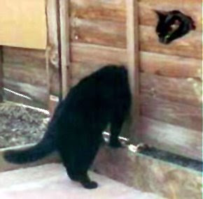 cat coincidence funny photo