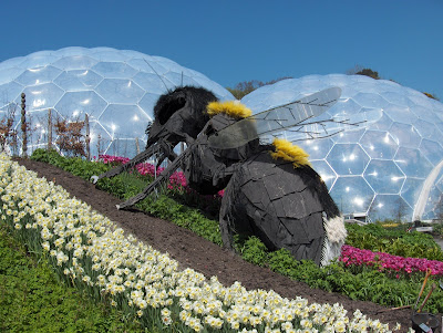 Giant bee at Eden