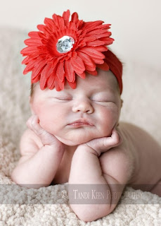 gerber daisy flower headbands on a baby