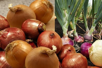 Onions — the perfect natural remedy for common cold and flu