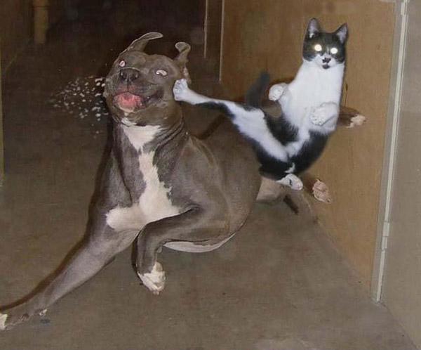 Gato se come un perro