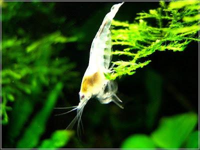 Ryby akwariowe - hyted96
