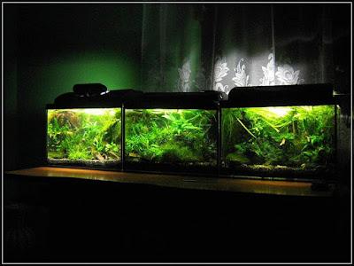 Ryby akwariowe - erty220
