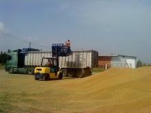 товарене зърнени култури