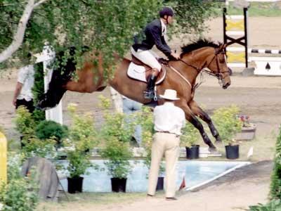 hauteur cso poney