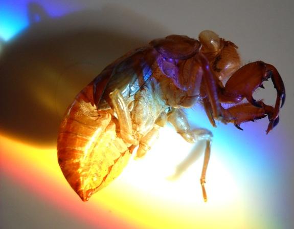 a bug serangga