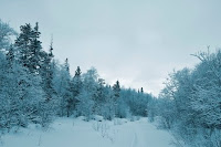 Snowy+Woods+(small).jpg