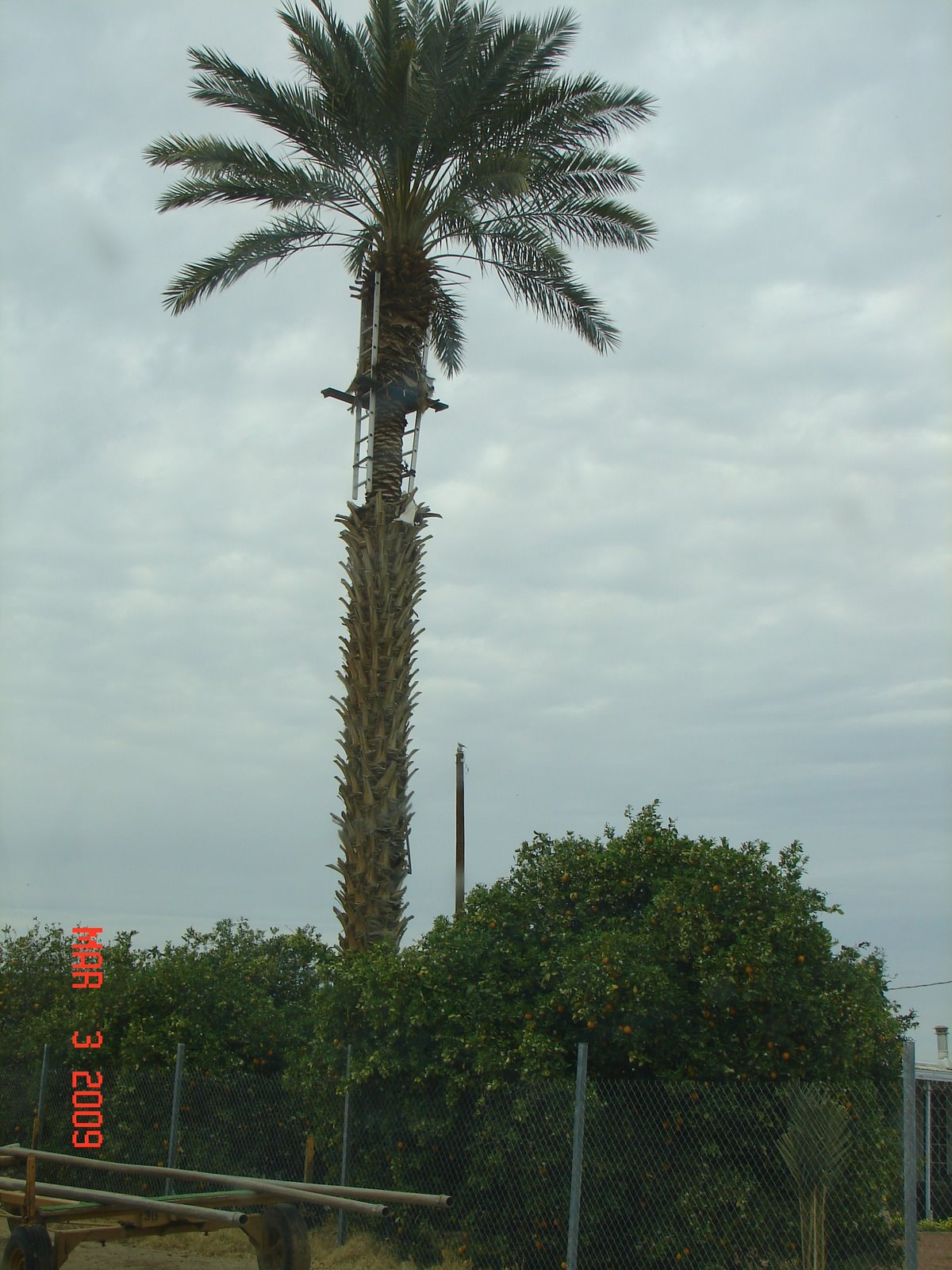 [trim+palm+tree.jpg]