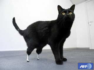 cat with bionic foot