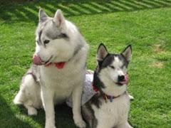 Prince and Laska