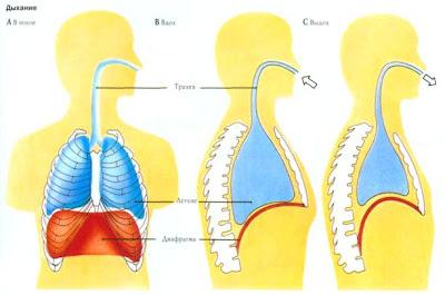 Формирование речевого дыхания.Лечение дизартрии